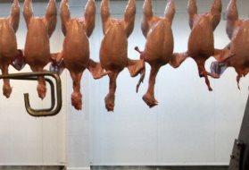 мяса птицы