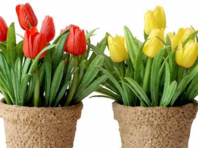 тюльпаны на FlowWow